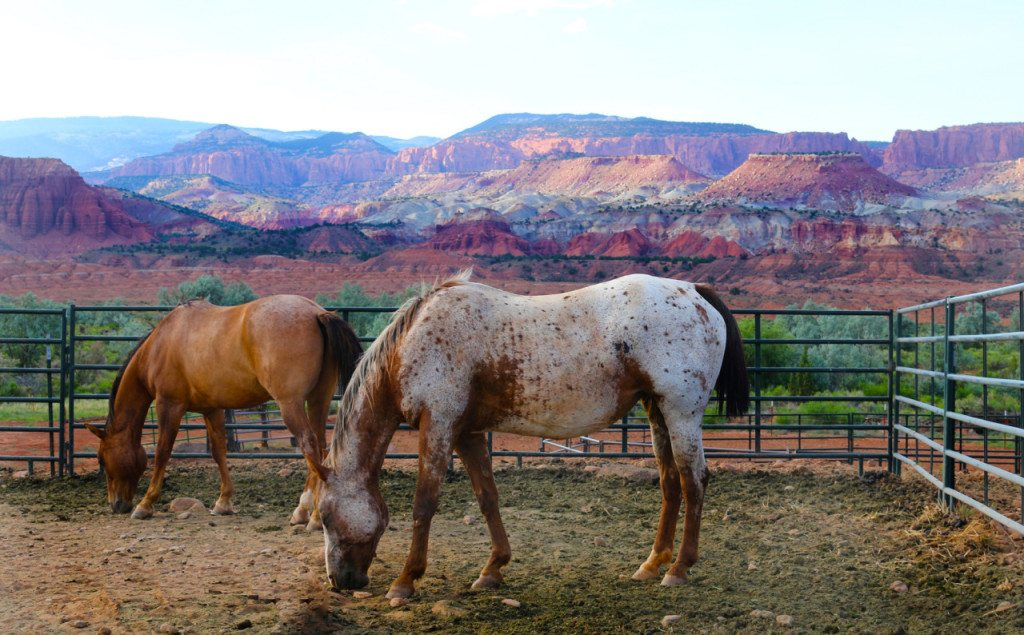 Utah – Canyonlands, Capitol Reef and Arches National Parks