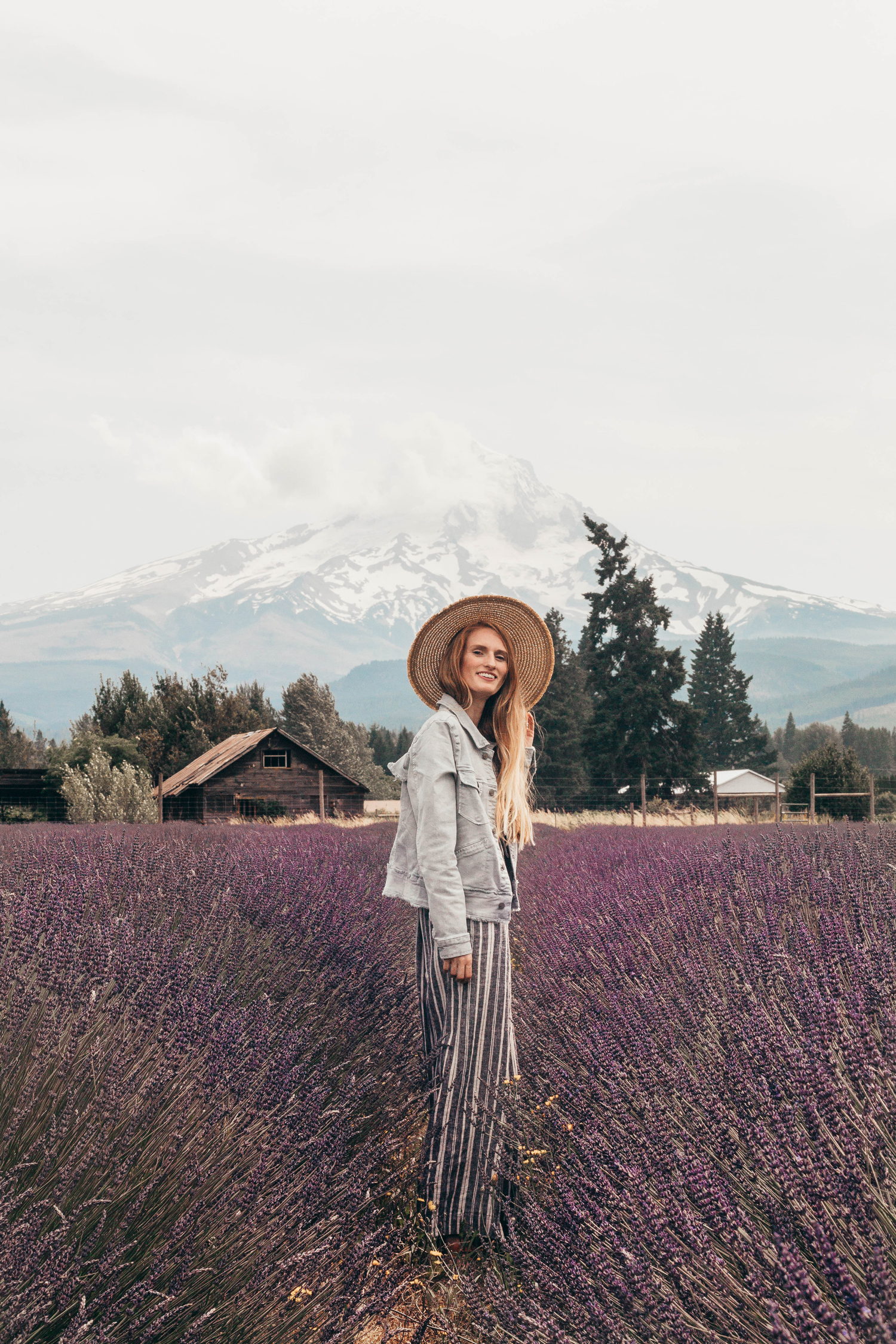 Mt. Hood Lavender Field Fruit Loop Flower Garden Hood River