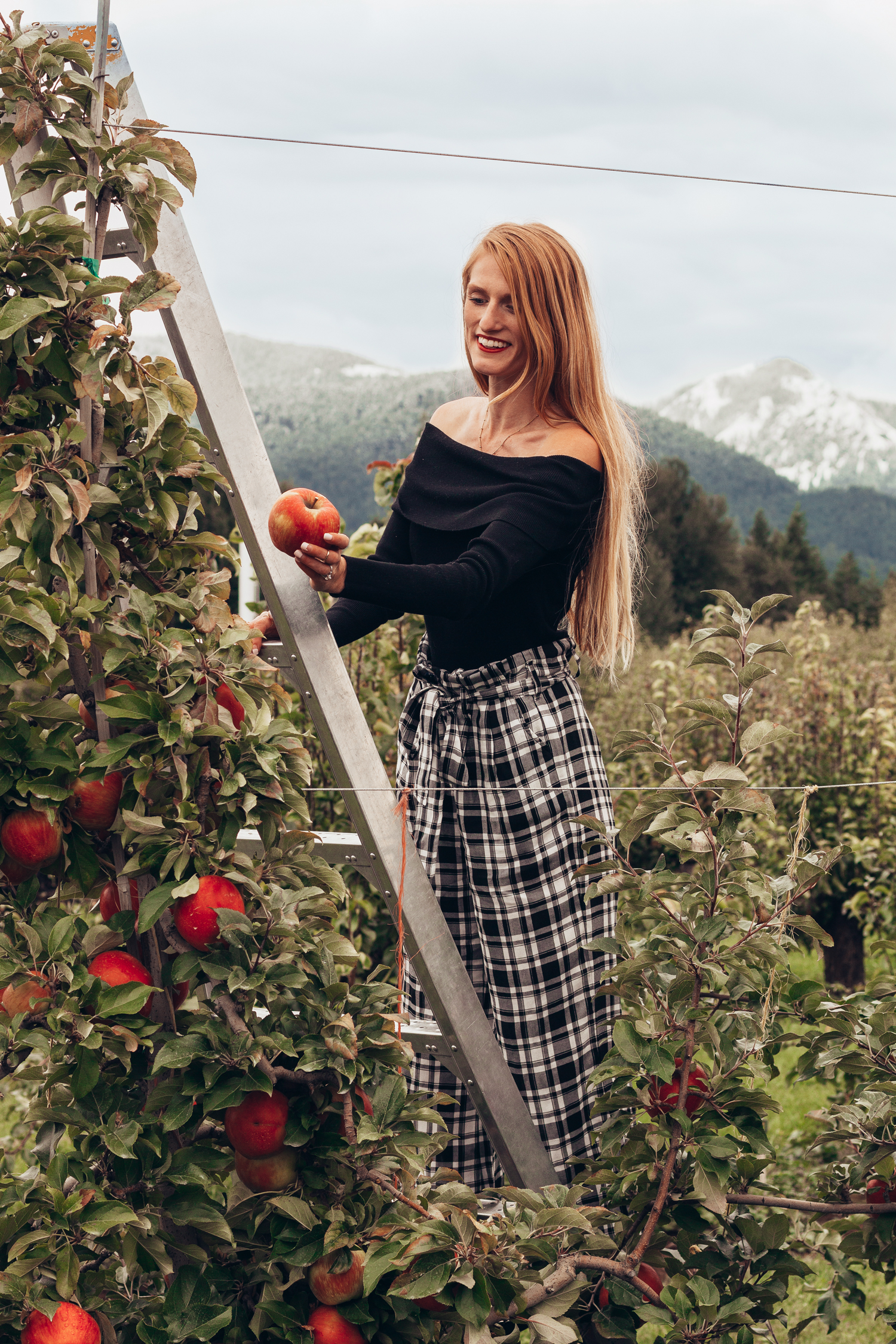 Apple Picking Plaid Billy T Kiyokawa Family Orchards Mt Hood Fruit Loop